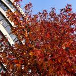 Why Are Urban Trees Necessary?