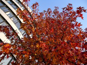 Read more about the article Why Are Urban Trees Necessary?
