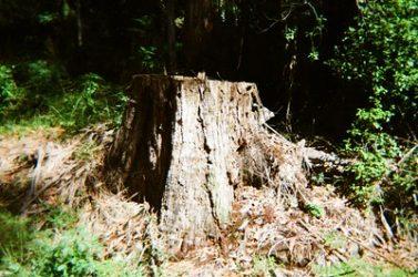 COVID-19 Tree Service Precautions