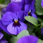 Best Flowers To Plant Under A Tree